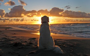 The Dog by the Sea at Sunset